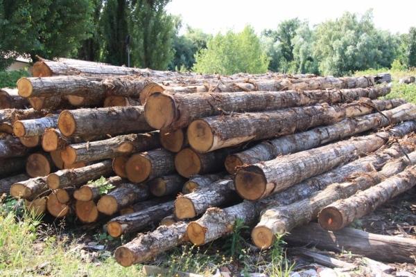 Pali in legno bricole pontili a venezia e mestre for Arredo giardino mestre